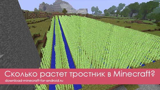 Сколько растет тростник в Minecraft?