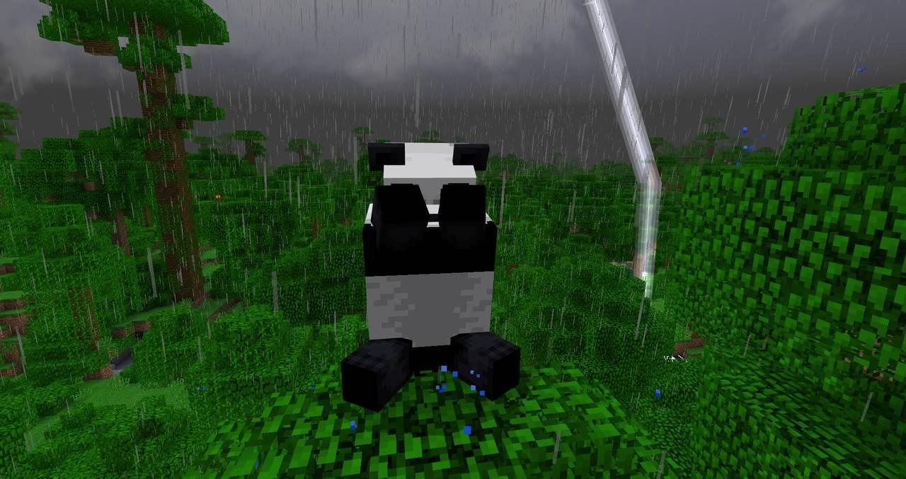 Панда в дождь